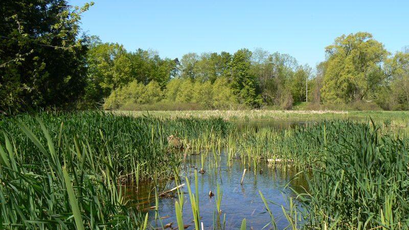 Inglis Falls Mill Pond Boardwalk