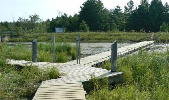Bognor Marsh Boardwalk