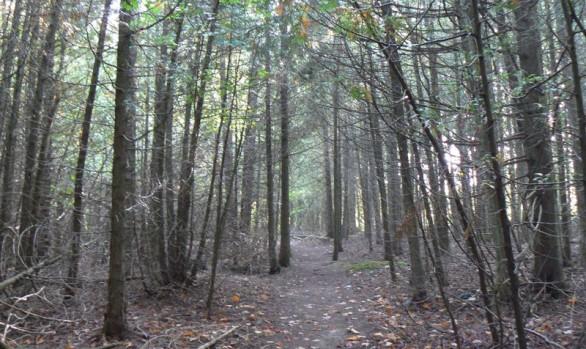 Feversham Gorge Trail