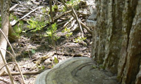 Massie Hills Fungus