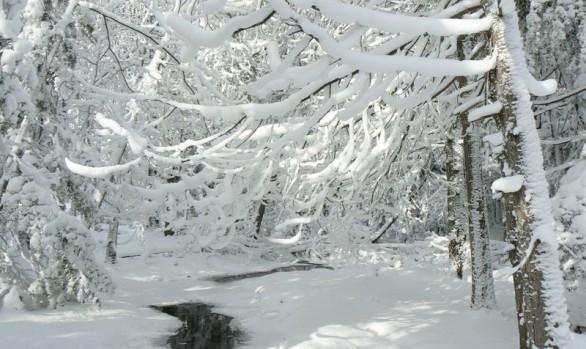 Massie Hills Winter