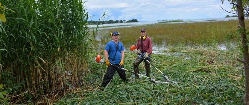 Phragmites Trimmers Available for Community Groups!