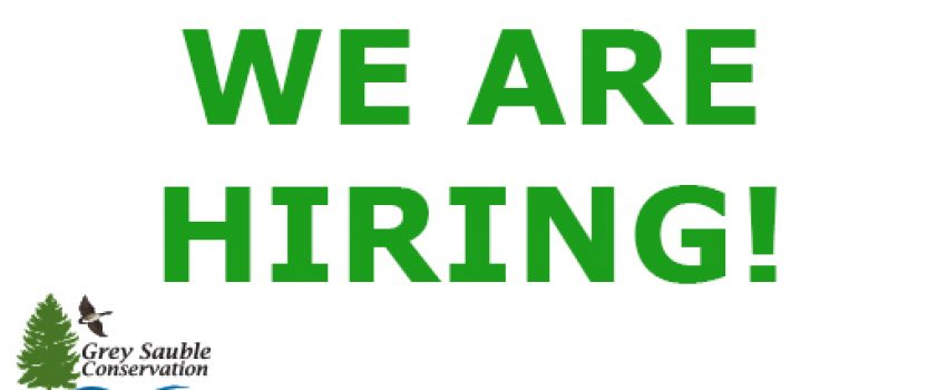 Now Hiring – Forestry Technician