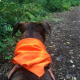 Hunting Season will Begin November 5th: Check the Map and Wear Orange