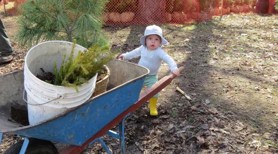 2019 Seedling and Landscape Tree Order Forms Available
