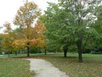 Arboretum in the Fall