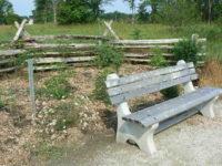 Arboretum Bench, Elder