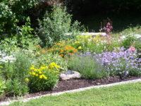 Arboretum Butterfly Garden